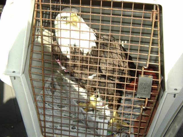 10-5 eagle crate