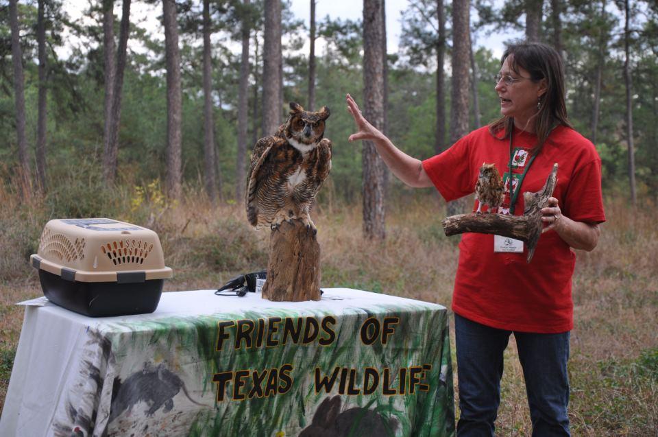 12-1 sef owls