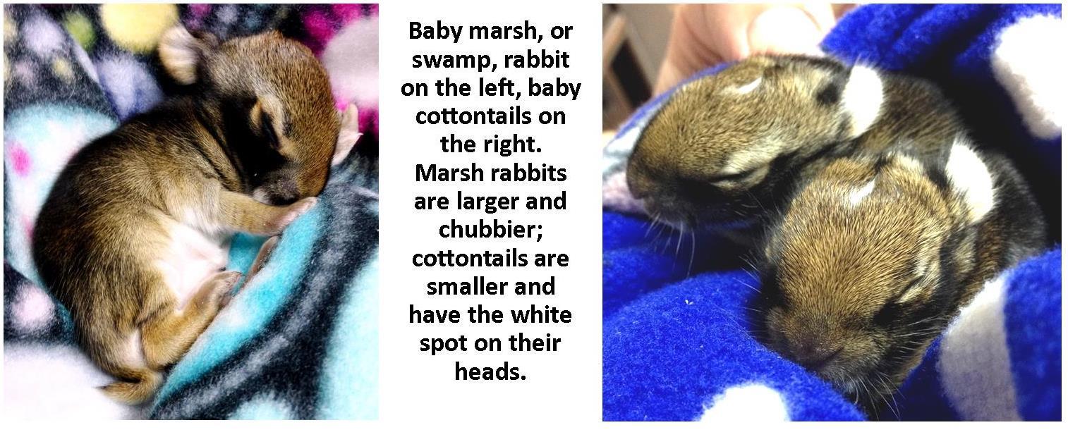 baby rabbit collage photo