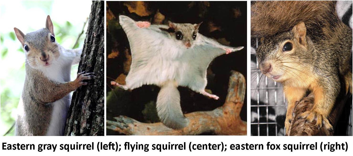 collage squirrel trio 2