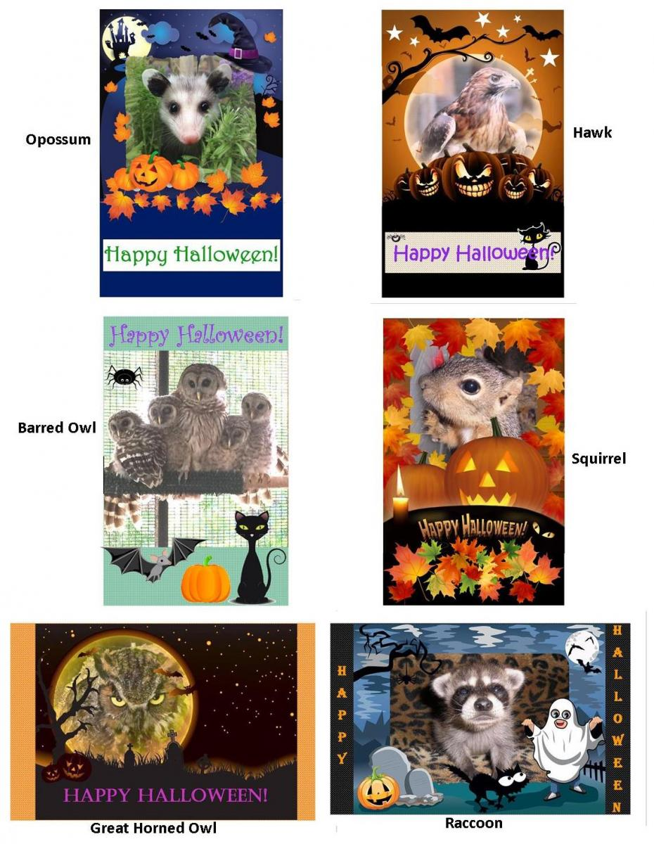 halloween card choices